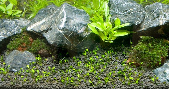 Planta Soil - podłoże akwariowe