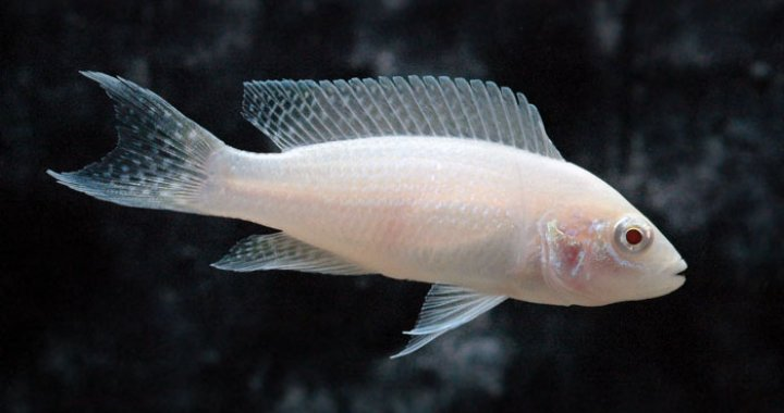 Księżniczka z Burundi - albino