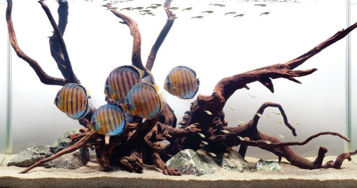 Akwarium z Paletkami