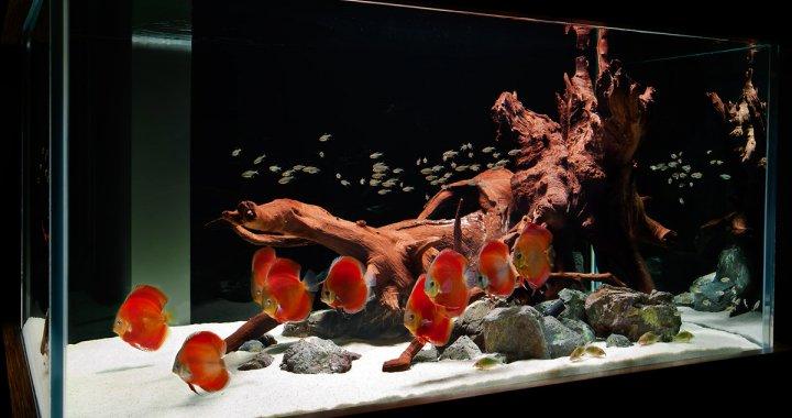 Aranżacja akwarium z paletkami