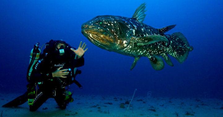 Latimeria menadoensis - ryba trzonopłetwa