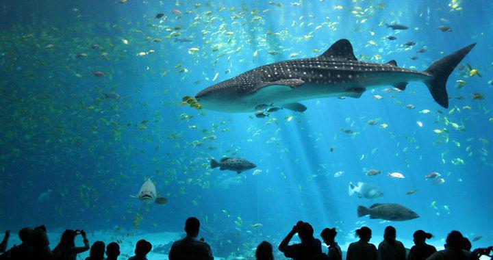 Największe publiczne akwarium na Świecie - Georgia, Atlanta