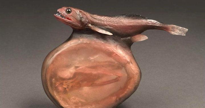 Pożeracz czarny - ryba głębinowa