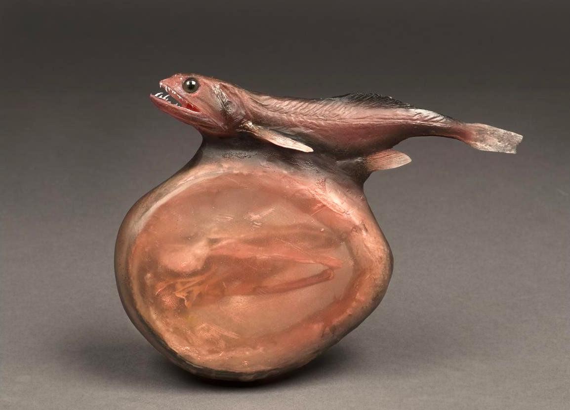 Pożeracz czarny - Chiasmodon niger