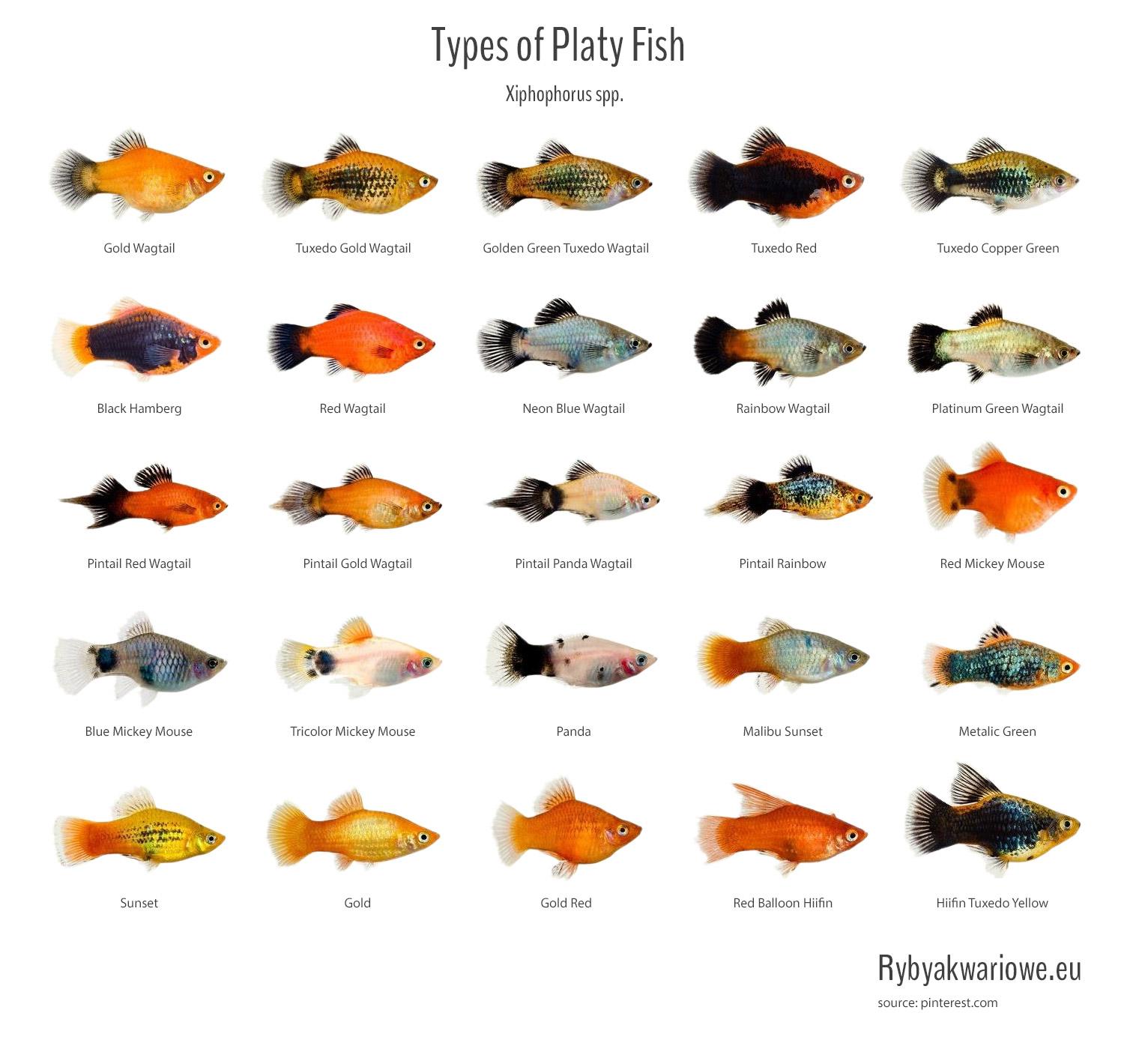 Wszystkie małe ryby się spotykają